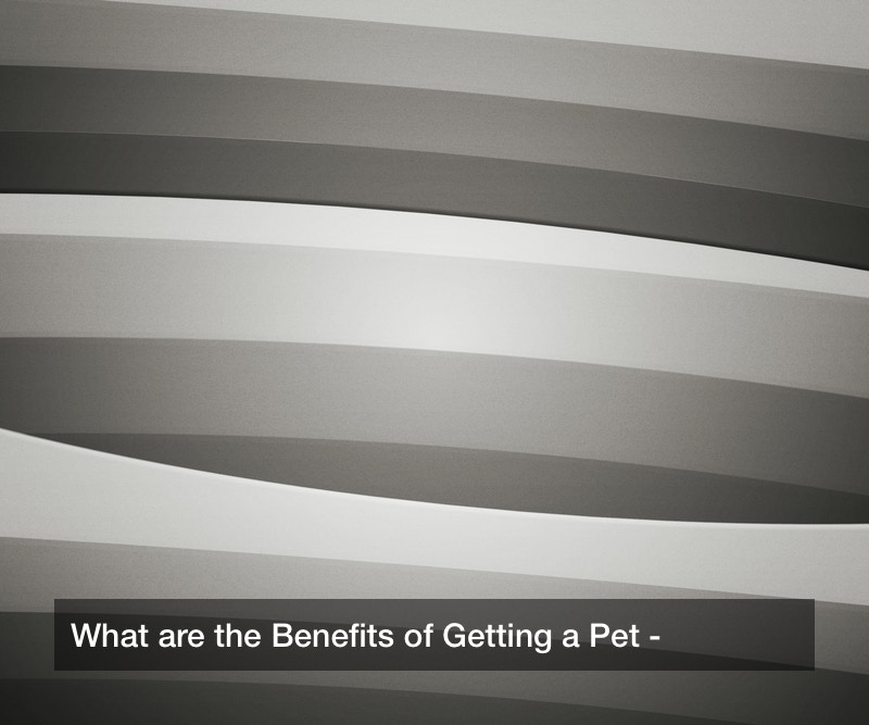 What are the Benefits of Getting a Pet?