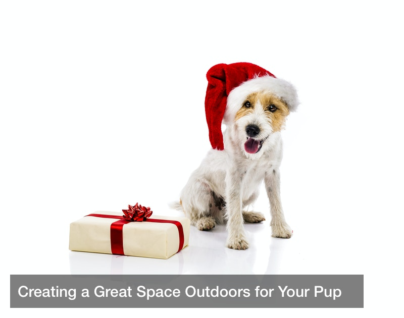 Creating a Great Space Outdoors for Your Pup