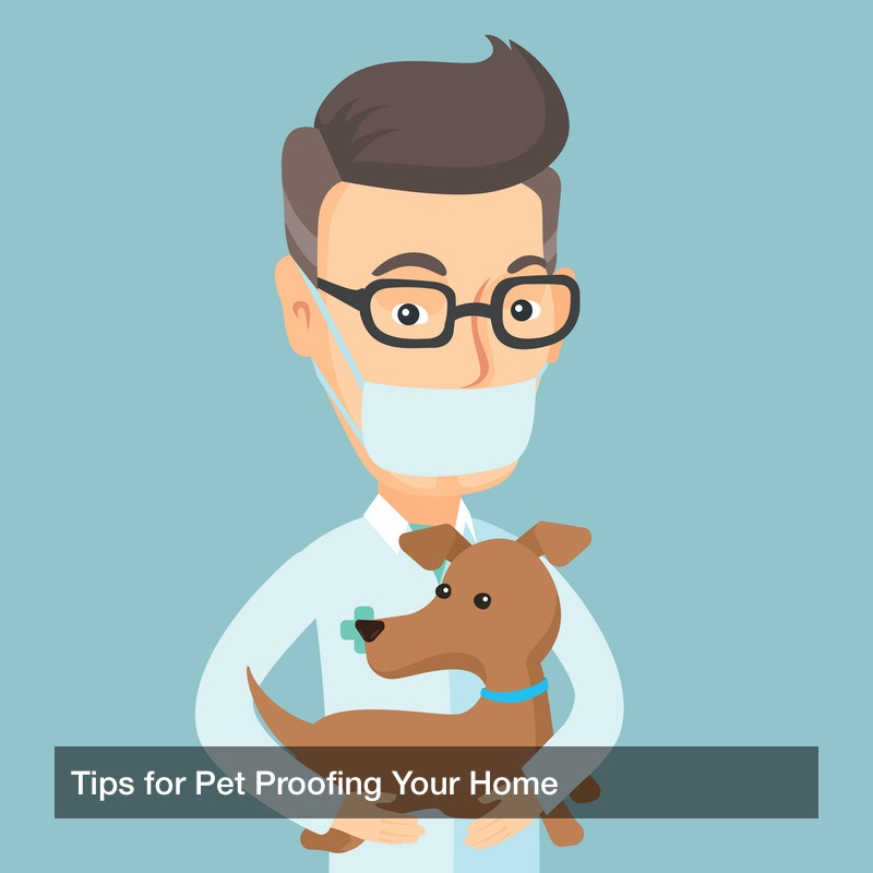 Tips for Pet Proofing Your Home