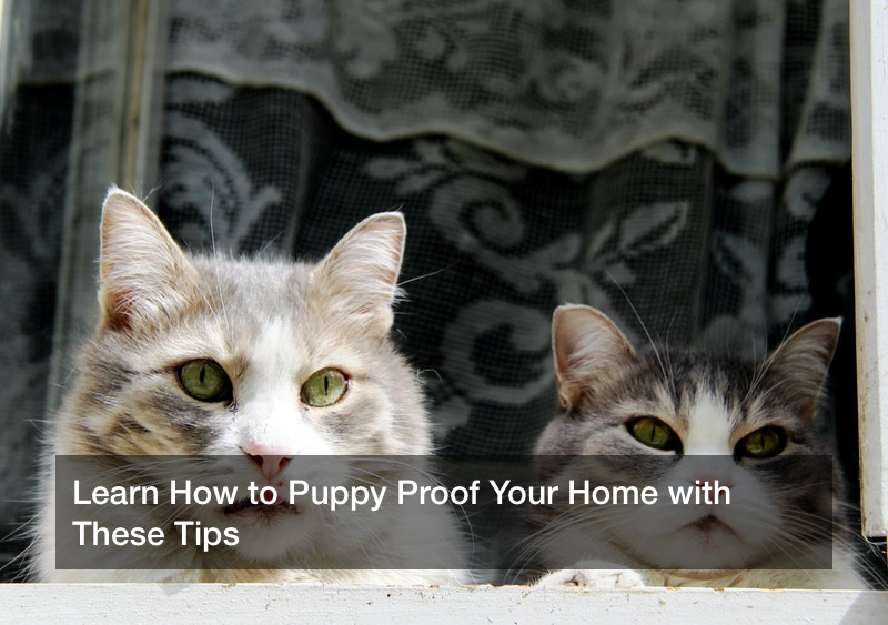 Learn How to Puppy Proof Your Home with These Tips