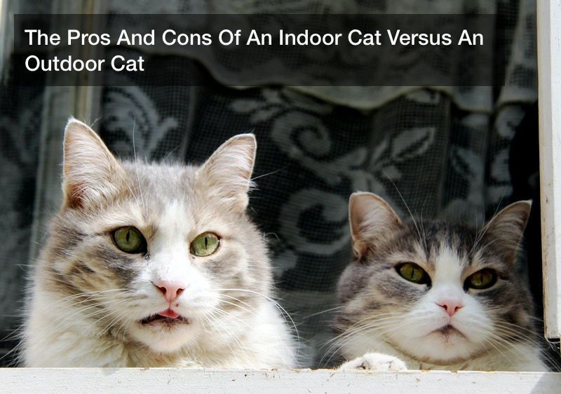 The Pros And Cons Of An Indoor Cat Versus An Outdoor Cat