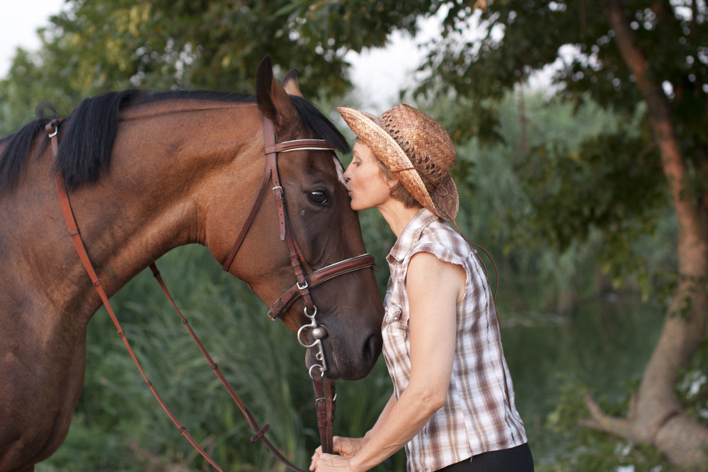 Physical Therapy Isn't Just For Humans  The Long-Term Benefits Of Therapy Products For Horses