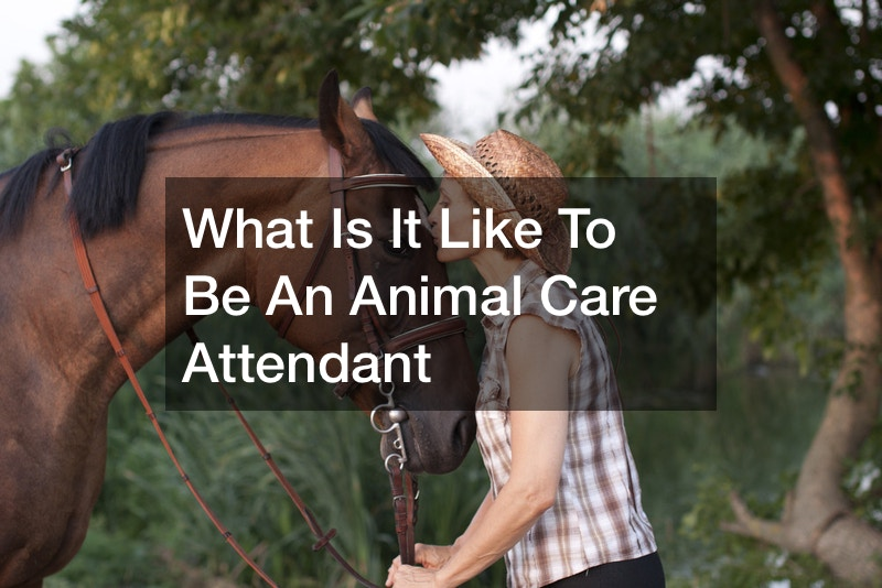 What Is It Like To Be An Animal Care Attendant