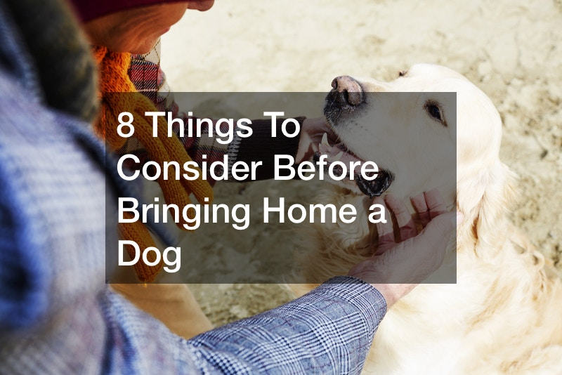 8 Things To Consider Before Bringing Home a Dog