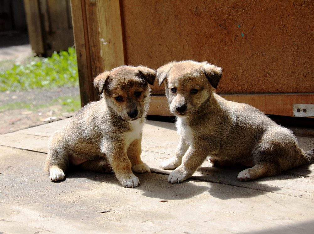 7 Signs That You Are Dealing with a Backyard Local Doodle Breeder