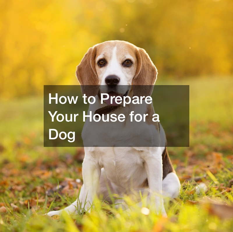 How to Prepare Your House for a Dog